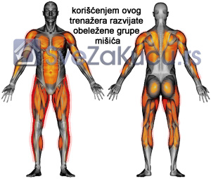 muskulatura